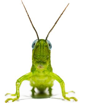 PICgrasshopper